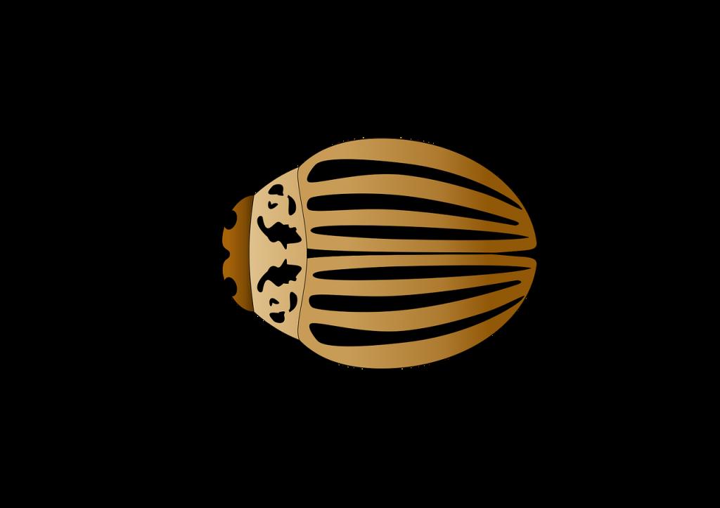 colorado potato beetle, insect, vector